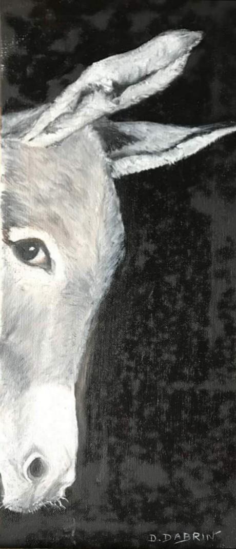 Cache cache d'un âne